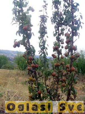 Rezervišite voćne sadnice na vreme - 30% popusta